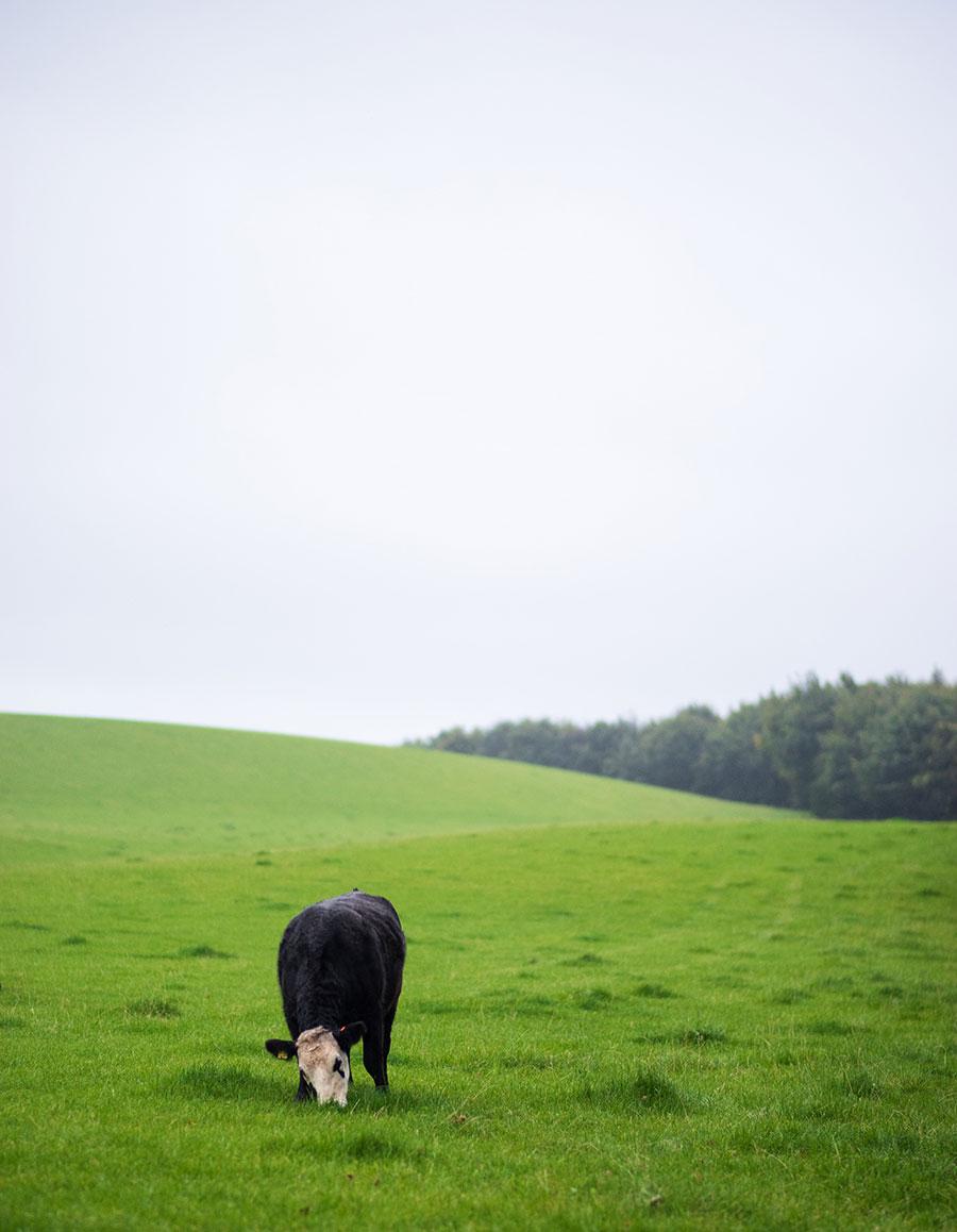 3 documentales sobre agricultura regenerativa