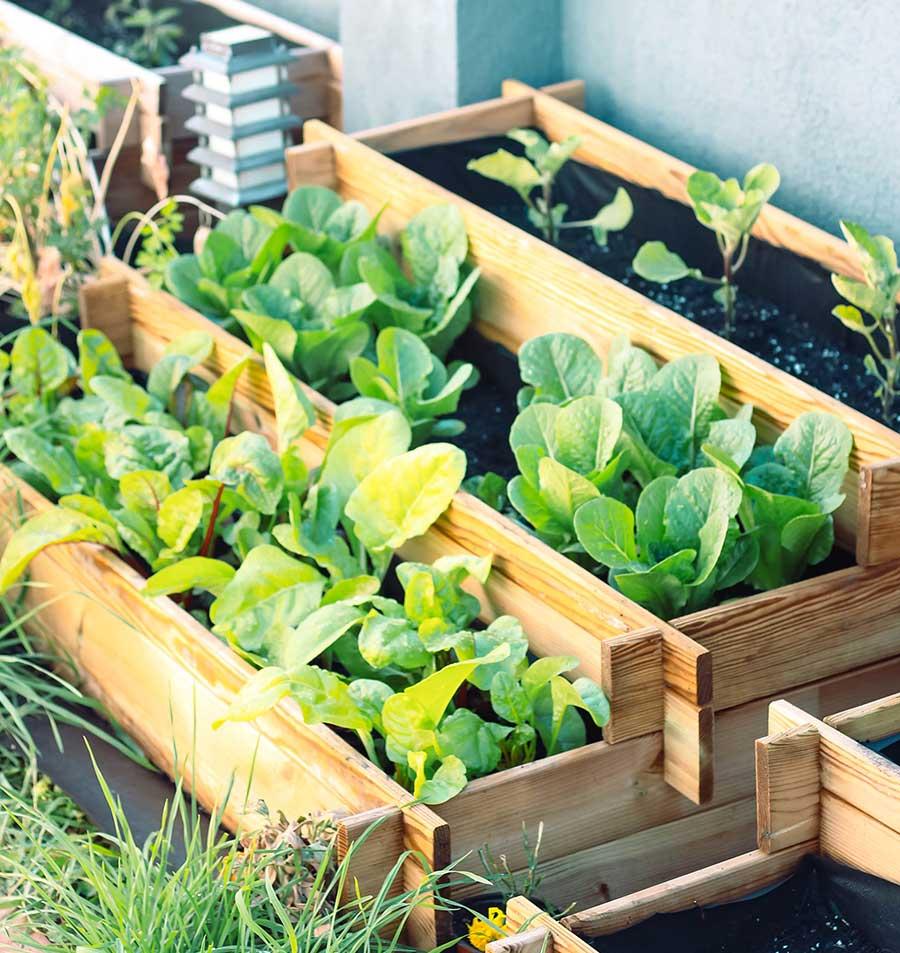 Jardinera huerto en escalera