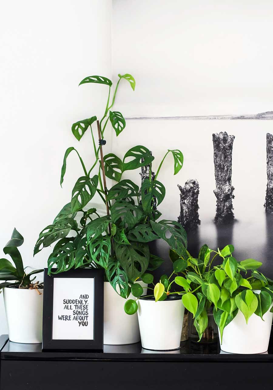 Dónde comprar plantas online