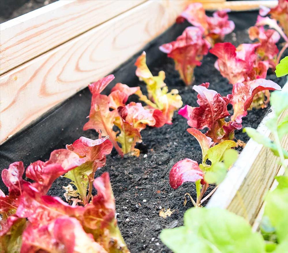 Móntate un huerto, curso gratuito de Plantea en Verde